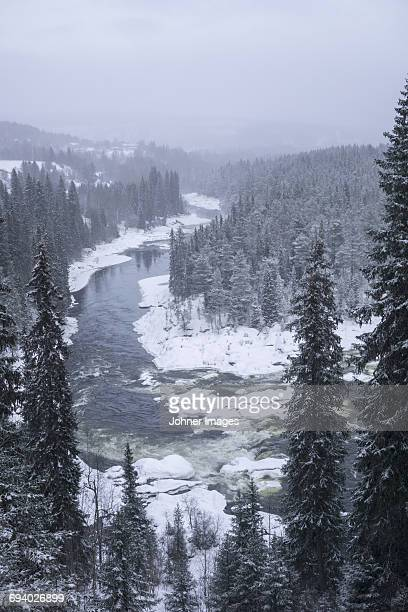 view over a river, forest in the winter