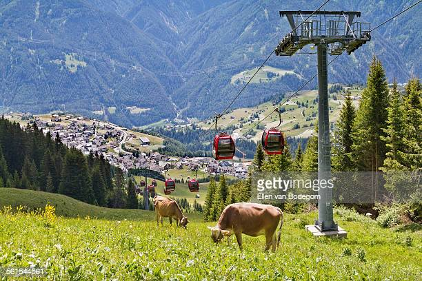 View over Fiss, Tyrol, with cows and cable car