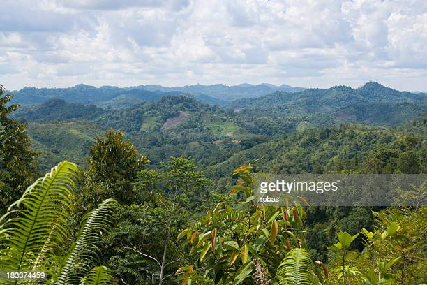 View over jungle in Borneo, Malaysia