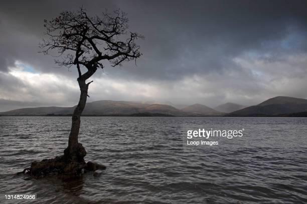 View over Loch Lomond from Milarrochy Bay near Balmaha.