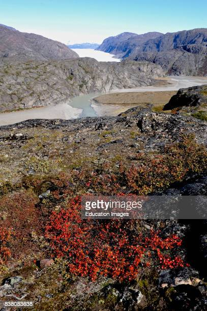 View over Narsasuaq glacier from a ridge. The glacier is seen in the background, sheltered by the ancient Greenlandic bedrock and followed by outwash...