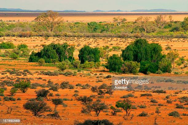View over riparian woodland including introduced Peppercorn trees Boolcoomatta Bush Heritage Australia Reserve northeastern South Australia
