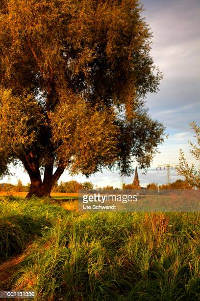 View over the Elbe meadows on an autumn evening, Radebeul, Saxony, Germany