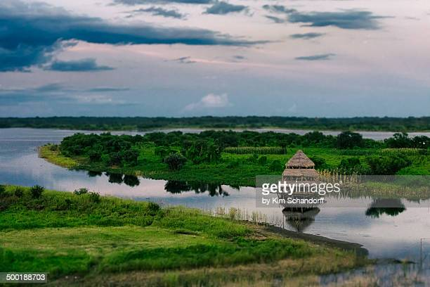 view over the jungle - iquitos stock pictures, royalty-free photos & images