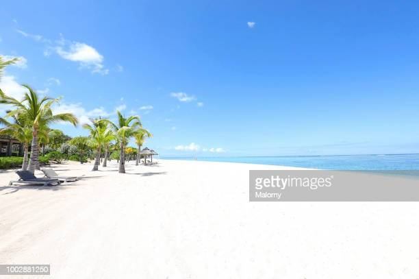 view over white sand beach with palm trees, clear turquoise sea in the background.  le morne brabant, rivière noire district, mauritius - islas mauricio fotografías e imágenes de stock