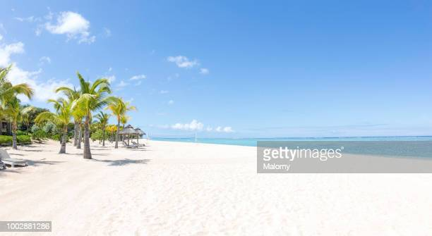 view over white sand beach with palm trees, clear turquoise sea in the background. - beach stockfoto's en -beelden