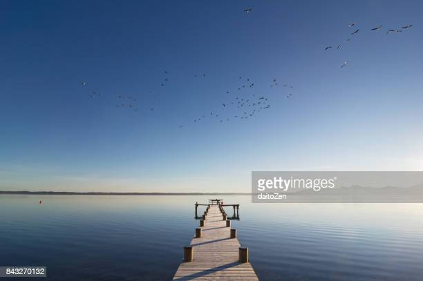 view over wooden jetty at lake chiemsee with group of greylag goose (anser anser) flying by, chiemgau, upper bavaria, germany - fluchtpunkt stock-fotos und bilder