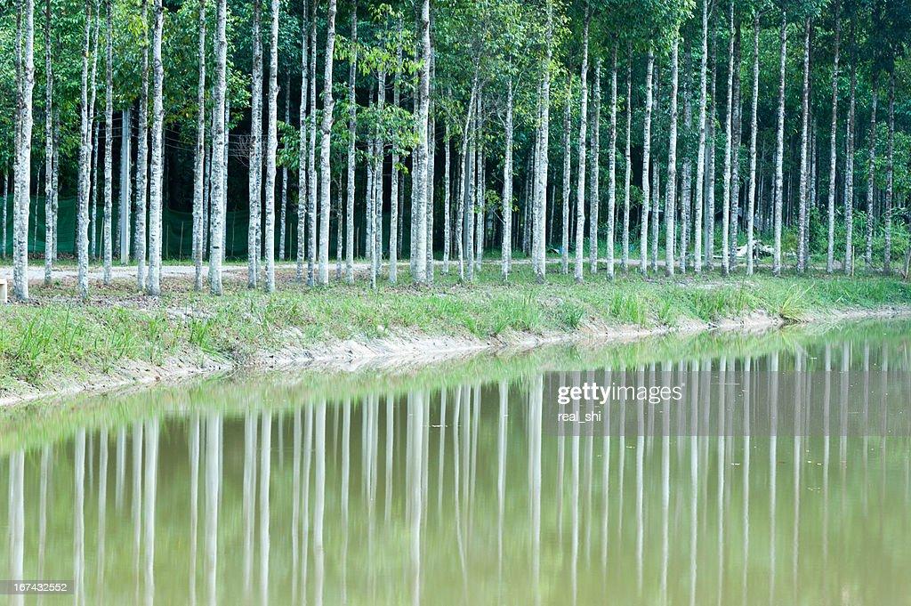 Reflectivo de naturaleza árbol vista al agua : Foto de stock
