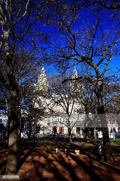 CONTENT] A view surrounded by Oak Trees of South African Jewish Museum