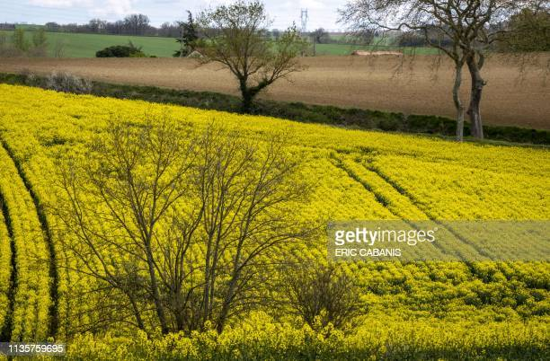 A view taken on April 8 2019 shows rapeseed fields near Lux southern France
