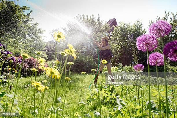 View through flowers of mature woman in garden watering flowers with hosepipe