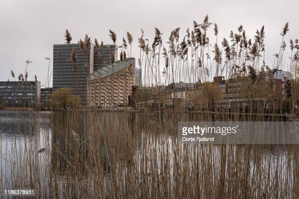 view through reed grass and a lake towards the tycho brahe planetarium and other buildings - dorte fjalland stock pictures, royalty-free photos & images