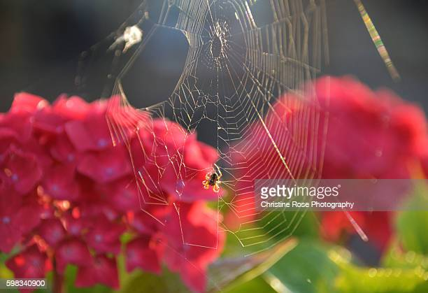 view through the web - christine heather stock pictures, royalty-free photos & images