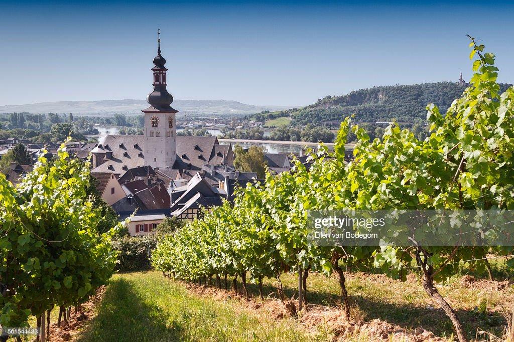 View through vineyard over Rudesheim am Rhein : Stock-Foto