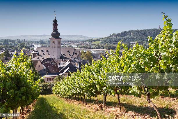 View through vineyard over Rudesheim am Rhein