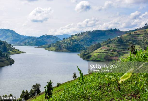 a view to lake bunyonyi - uganda stock pictures, royalty-free photos & images