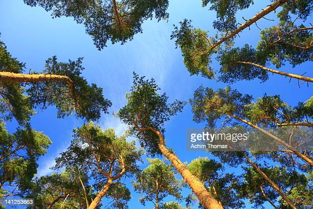 view to sky and trees - achim thomae stock-fotos und bilder