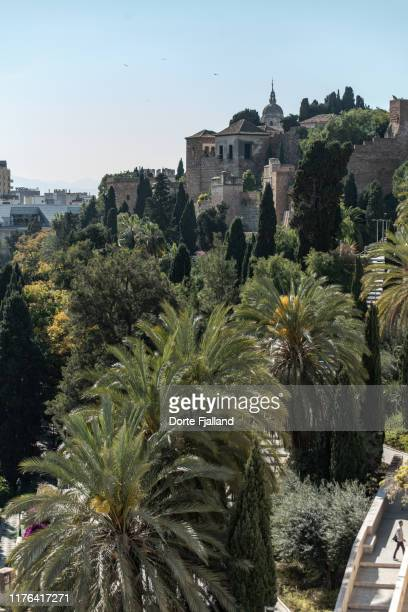 view to the alcazaba fortress in málaga city with palm trees in the foreground - dorte fjalland stock-fotos und bilder