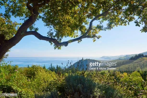 view to the geopark costa vasca at the the atlantic ocean between trees next to the camino del norte on the way to deba, coastal path, way of st. james, camino de santiago trail, basque country, spain - ジオパーク ストックフォトと画像