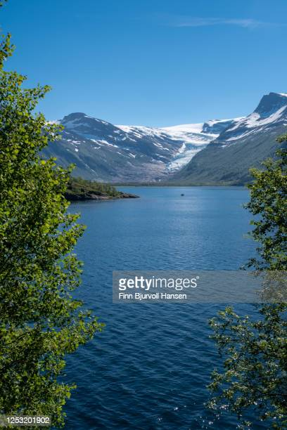 view to the glacier engenbreen/svartisen, norway - framed with green trees, vertical image - finn bjurvoll stock pictures, royalty-free photos & images