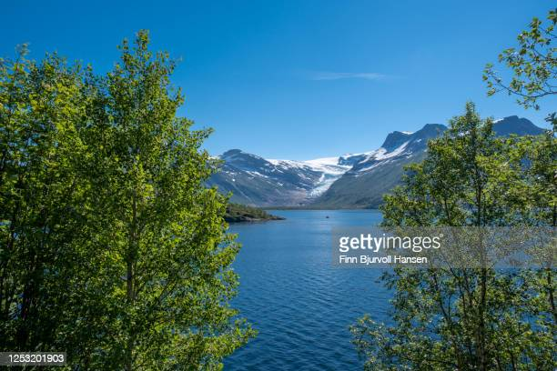 view to the glacier engenbreen/svartisen, norway - framed with green trees - finn bjurvoll stock pictures, royalty-free photos & images