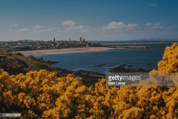 view toward the town of st andrews seen from the cliffs over the east sands - st. andrews scotland stock pictures, royalty-free photos & images
