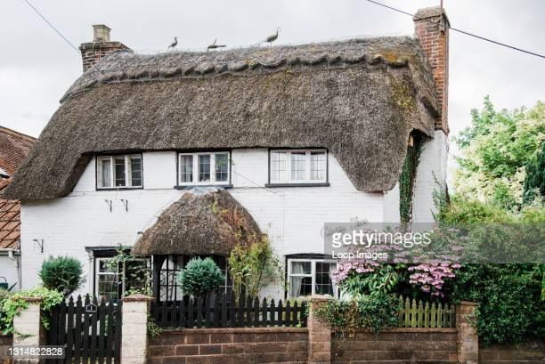 View towards a charming country cottage with thatched roof.
