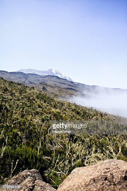 A view towards the peak of Mt. Kilimanjaro from the Machame Route, Mt. Kilimanjaro, Tanzania