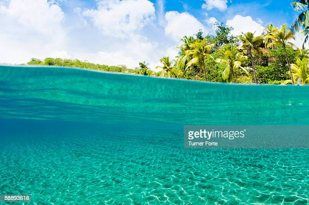 View underwater and tropical landscape above
