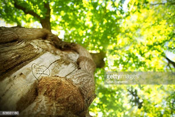 View up a tree trunk with a carved heart