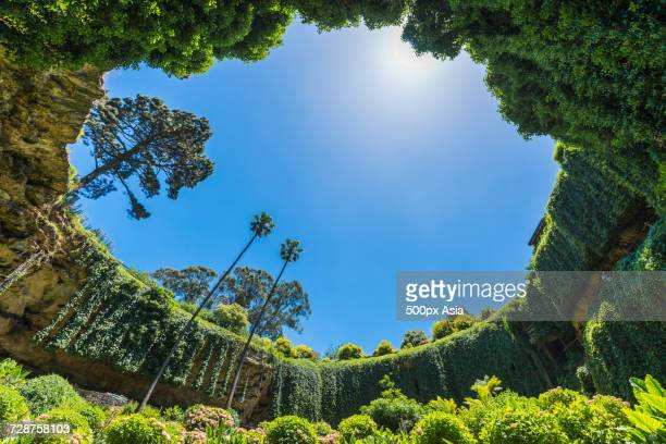 view up fromengelbrechtcave, mountgambier, australia - image stock pictures, royalty-free photos & images