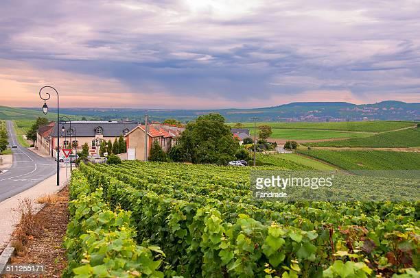 View Vineyards in Epernay. France