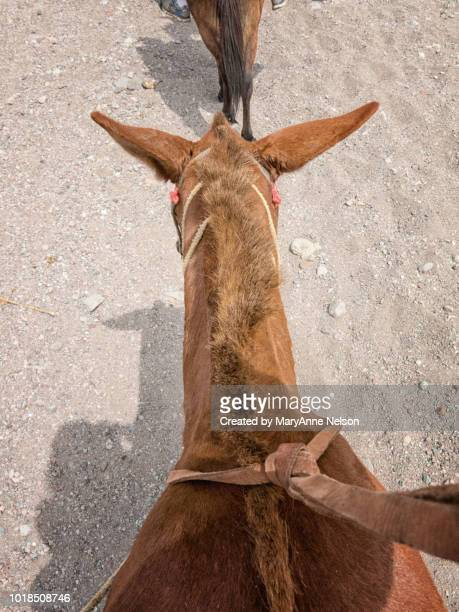 view while riding a mule - mexican riding donkey stock photos and pictures