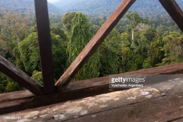 viewing platform in maliau basin, tropical rainforest, borneo, malaysia - argenberg stock-fotos und bilder