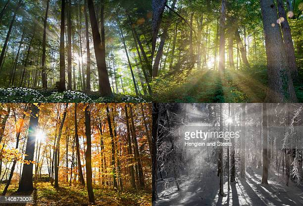 views of four seasons of forest - jahreszeit stock-fotos und bilder