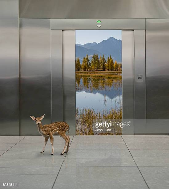 views of outdoor scenes in elevators with fawn.