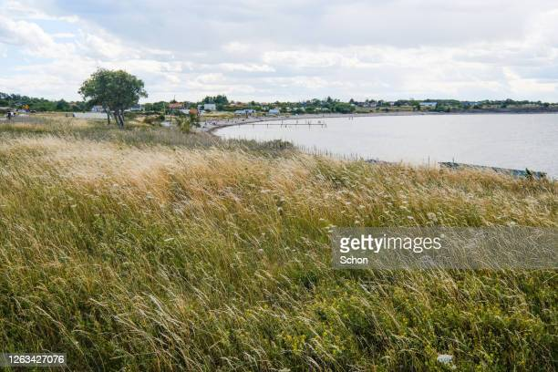 views of the beach at djupvik in summer in daylight - エーランド ストックフォトと画像