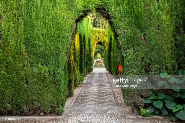 views of the generalife gardens, in the palace of the alhambra, granada.  andalusia.  spain - granada spain landmark stock pictures, royalty-free photos & images