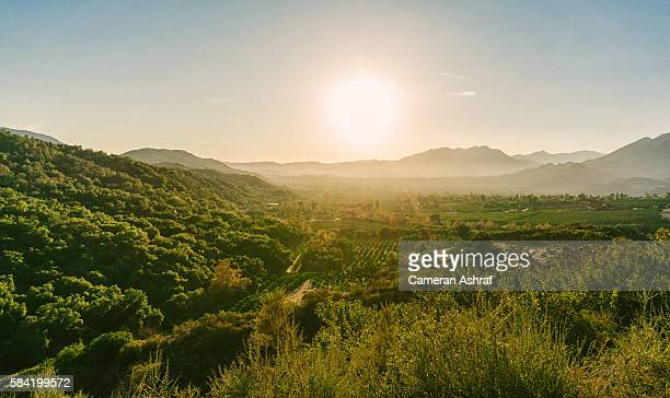 views of the ojai valley and citrus trees from ojai, california - orchard stockfoto's en -beelden
