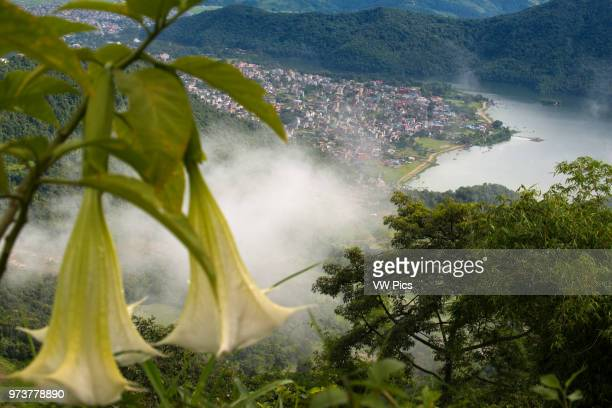 Views of the town of Pokhara from Sarangkot Nepal The best place to see the himalayan is 1592 m in Sarangkot