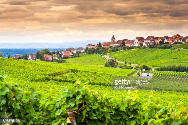 views over vineyards around an ancient village of zellenberg, alsace, france - france stock pictures, royalty-free photos & images