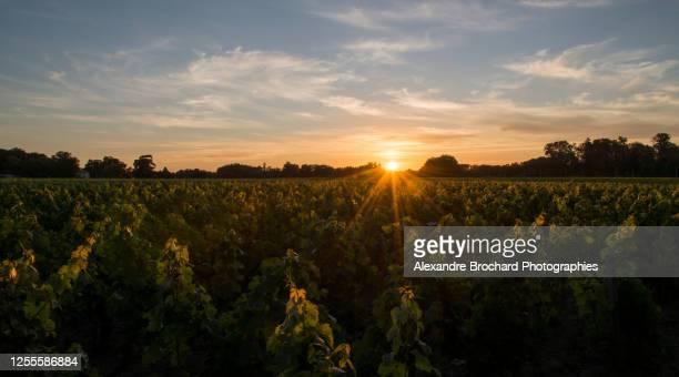 vignes - bordeaux stockfoto's en -beelden