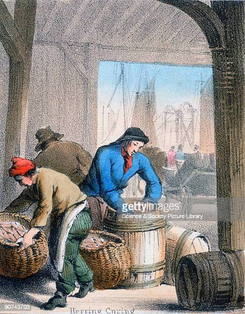 Vignette from a coloured lithographic plate showing men packing herrings into barrels for preservation by salt or pickling Taken from 'The Fish' in...