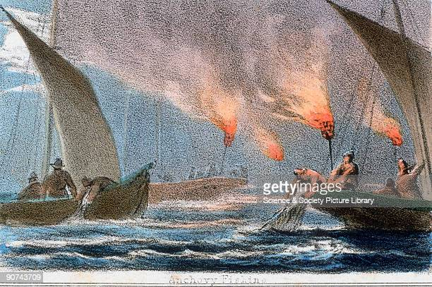 Vignette from a coloured lithographic plate showing night fishing for anchovies using flaming torches Fishermen are heaving fishing nets on board...