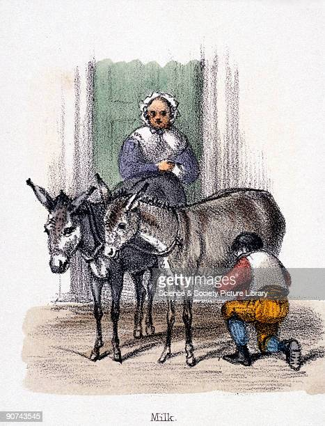 Vignette from a lithographic plate showing a man milking a donkey or ass in front of a house Asses� or donkey's milk is higher in both sugar and...