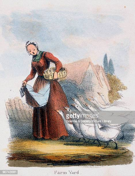 Vignette from a lithographic plate showing a woman feeding geese Taken from 'The Swan Goose and Duck' in 'Graphic Illustrations of Animals Showing...