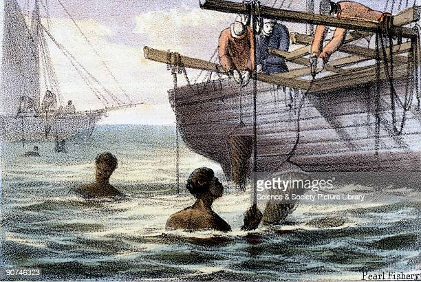 Vignette from a lithographic plate showing pearlers diving from boats taken from 'Crustacea Reptiles' in 'Graphic Illustrations of Animals Showing...