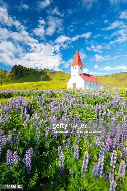 vik church and lupines in summer during sunset, iceland - iceland stock pictures, royalty-free photos & images
