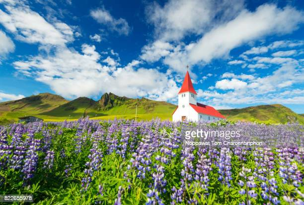 Vik Church and Lupines in Summer, Iceland