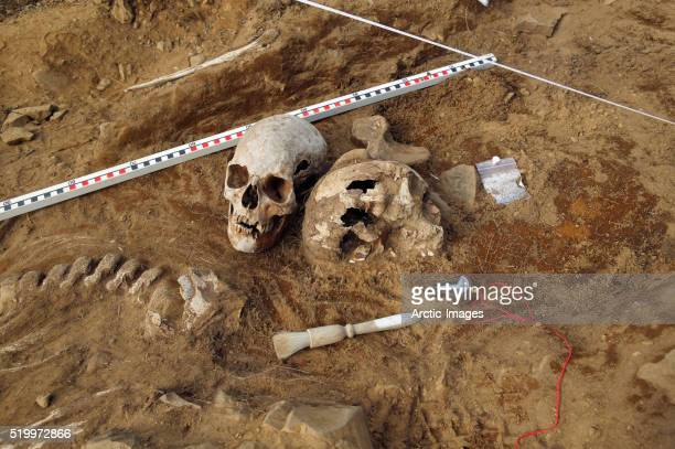 viking era human skeletal remains at archaeological site - archaeology stock pictures, royalty-free photos & images